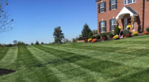 Bohonyi Landscaping Lawn Care